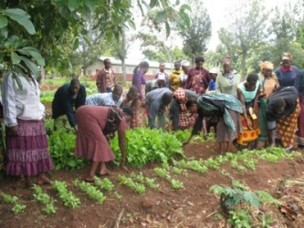 6-Women farmers learning to transplant seedlings