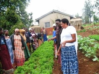 9-carrot demo garden